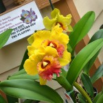 orchids for sale at the orchid gardens