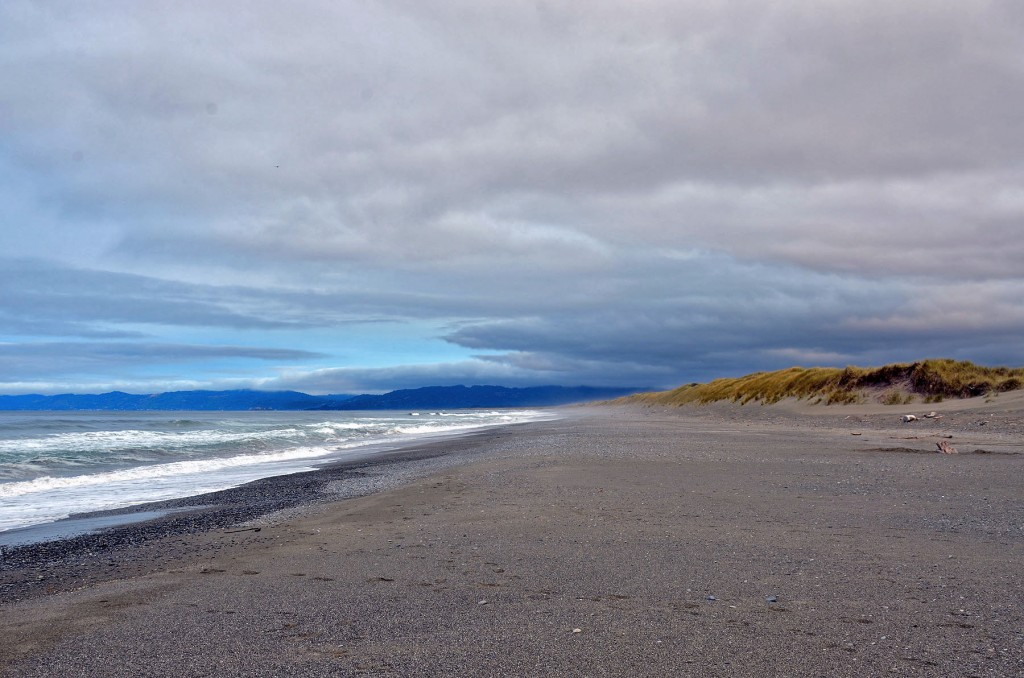 A deserted beach looking toward the north at Tolowa Dunes State Park near Crescent City